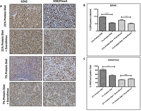 Epigenetic alterations associated with low protein diet in the LuCaP23.1-CR model.