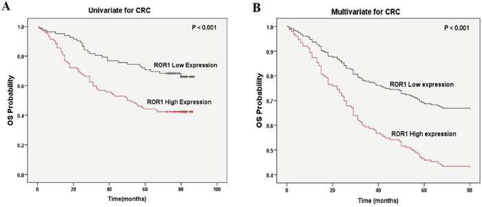 Correlation of ROR1 expression with overall survival in CRC patients.