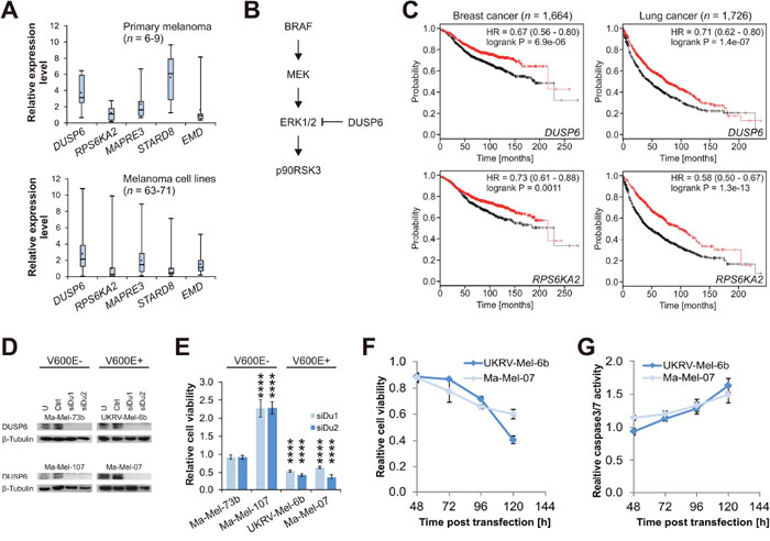 DUSP6 is a context-specific synthetic lethal target in melanoma.
