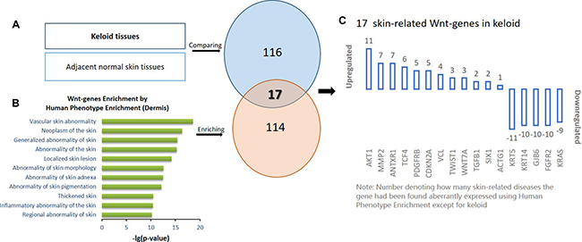 The schematic protocol for stepwise bioinformatics identifying the 17 skin-related keloid-aberrant Wnt-genes.