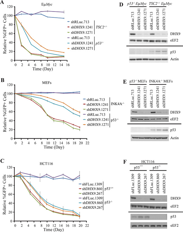DHX9 suppression reduces cellular fitness in both p53-wildtype and p53-null systems.