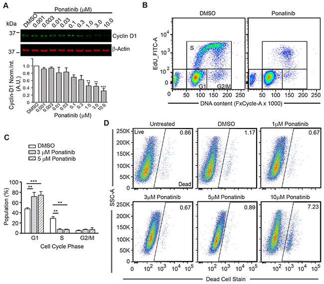 Ponatinib arrests merlin-deficient HSC at the G1 phase of the cell cycle.