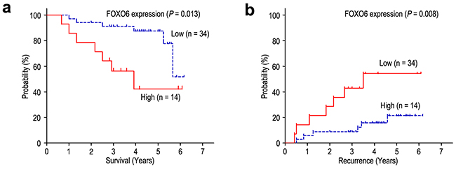 FOXO6 overexpression indicates poor prognosis in TNM stage I gastric cancer patients.