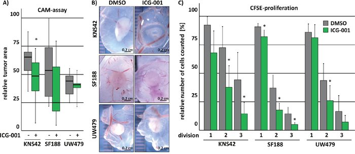 ICG-001 inhibits tumor growth in vivo.