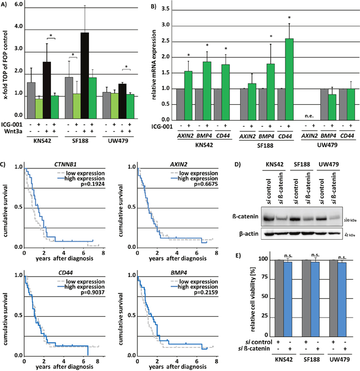ICG-001 variably affects β-catenin/Wnt-signaling in pedHGG cell lines.