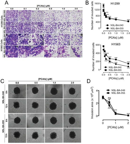 PCAIs suppress 2D and 3D cell invasion.