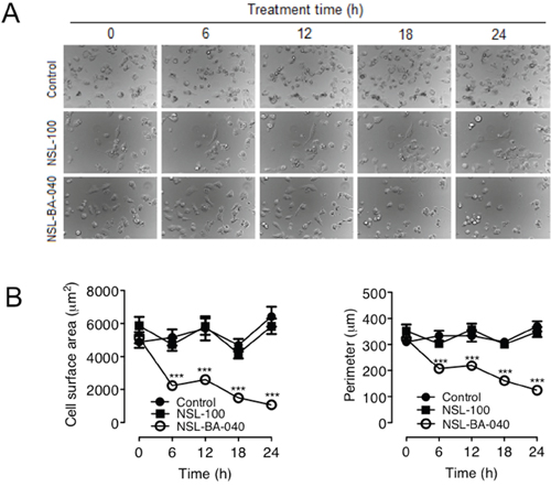 NSL-BA-040-induced changes in H1299 cell morphology are dependent on the farnesyl moiety.