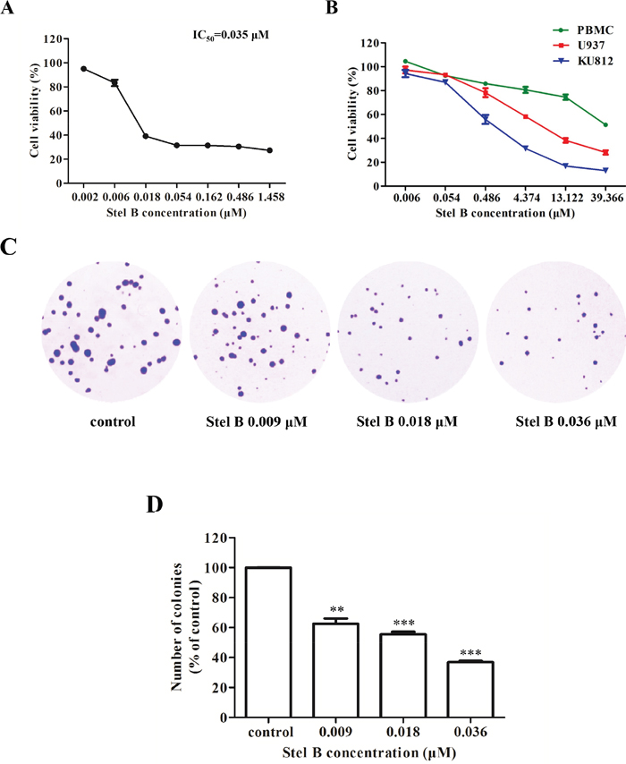 Potent Effect of Stel B on growth of CML cells.