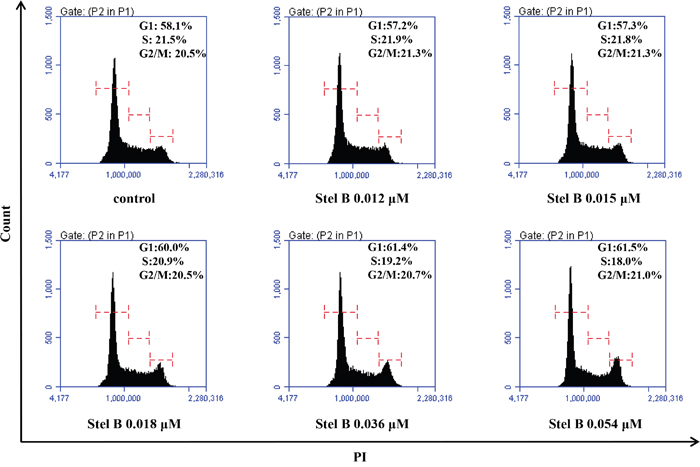 Cell cycle distribution of K562 cells with or without Stel B treatment.
