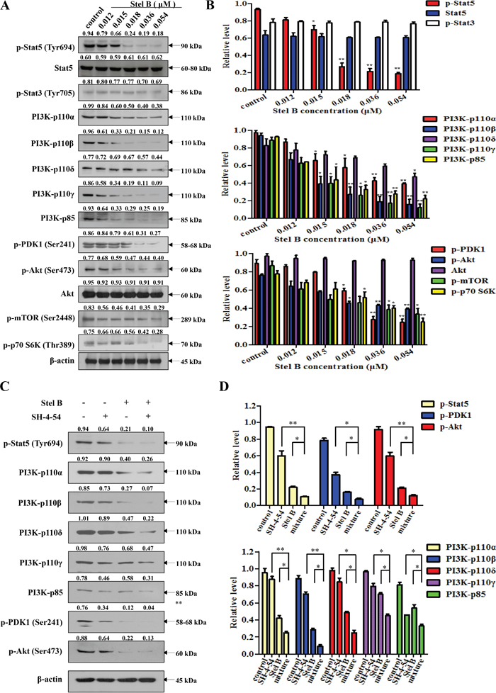 Effect of Stel B on Stat5, PI3K and the downstream effectors in PI3K/Akt pathway in K562 cells.