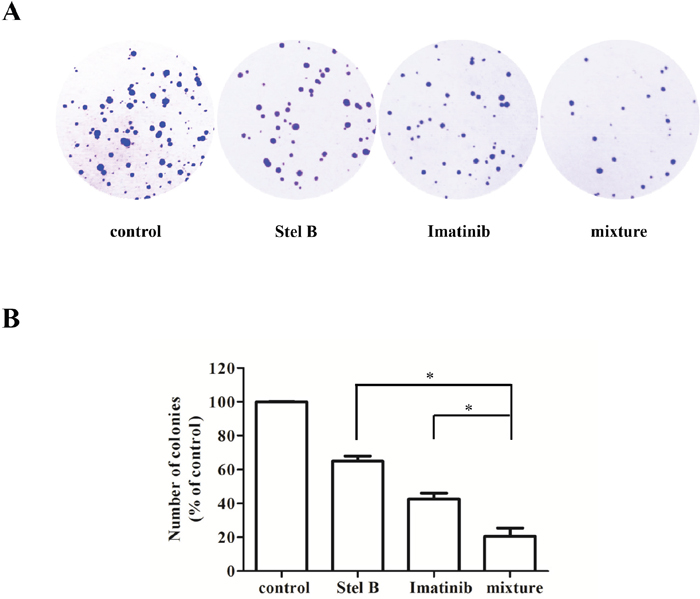 Effect of the combination of Stel B and Imatinib on tumorigenicity of K562 cells.