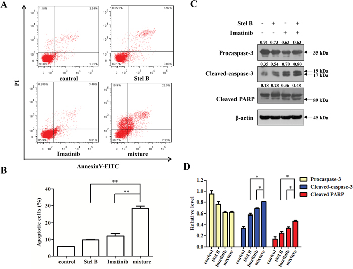 Effect of the combination of Stel B and Imatinib on apoptosis in K562 cells.