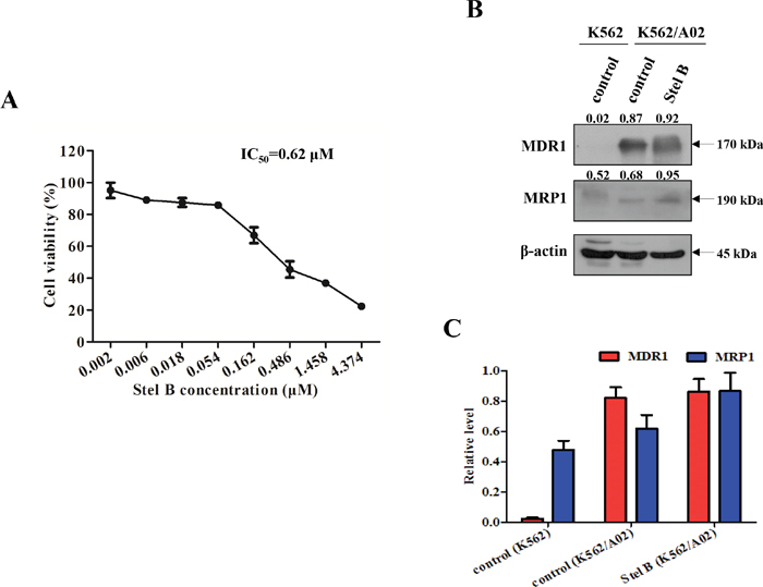 Effect of Stel B on the growth of multidrug resistant K562/A02 cells.