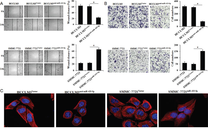 MiR-425-5p promotes HCC cell migration and invasion in vitro.