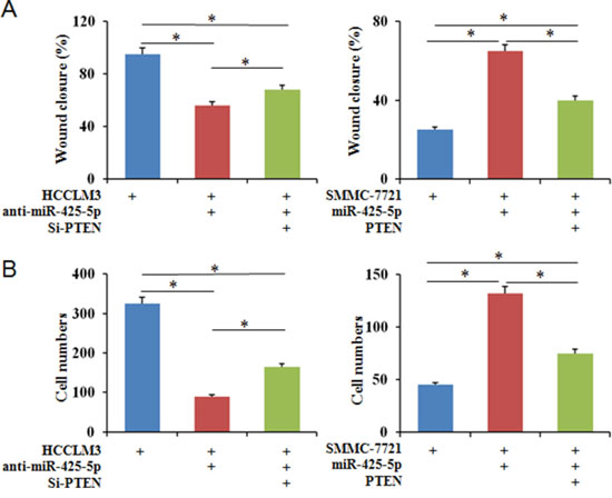 PTEN partially blocks the effects of miR-425-5p on the migration and invasion of HCC cells.