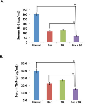 Fig 8: TQ modulates serum levels of IL-6 and TNF-α in MM tumor bearing mice.