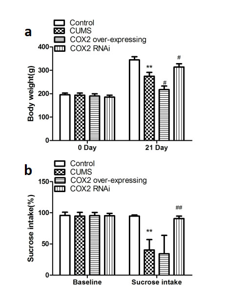 Effects of COX2 over-expression or RNAi on the changes of depressive-like behaviors in CUMS-treated rats.
