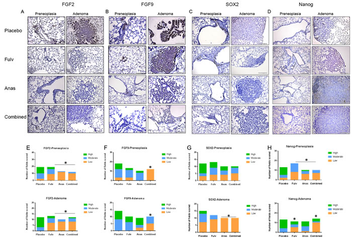 FGF2, FGF9, SOX2, and Nanog expression is decreased in lungs of mice treated with fulvestrant and anastrozole.