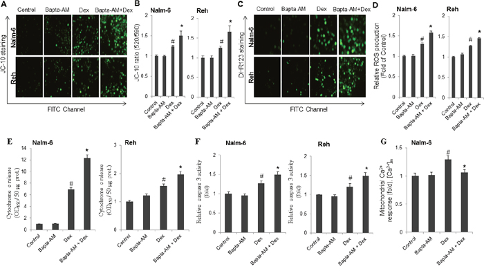 Co-treatment with dexamethasone and Bapta-AM markedly increases mitochondrial membrane potential depolarization, reactive oxygen species production, cytochrome c release and caspase 3 activity in ALL cells.