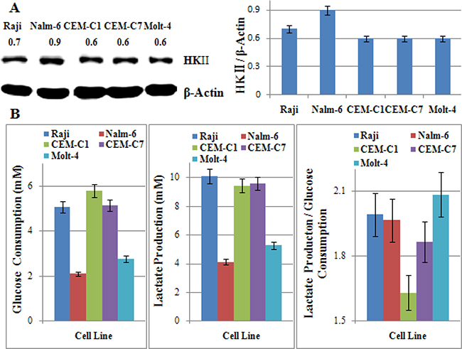 The glycolytic phenotype dose not correlate with the sensitivity to 2-DG in ALL cells.