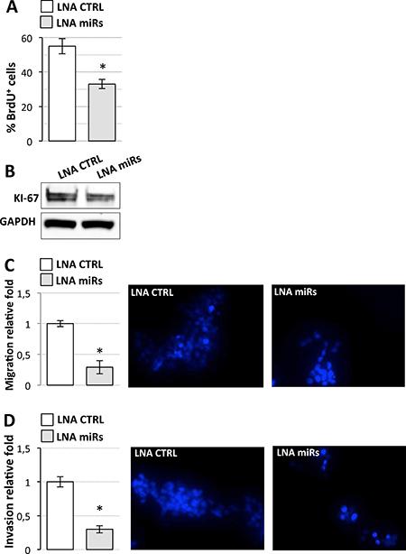 Effects of miR-19a-3p, miR-19b-3p, miR-106a-5p inhibition on D283 Med cell properties.
