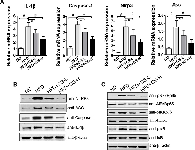 CS treatment inhibits HFD-induced expression levels of NLRP3 inflammasome component genes and reduces NF-κB signaling in EAT.