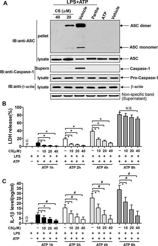 CS inhibits the formation of NLRP3-induced ASC pyroptosome and pyroptosis.