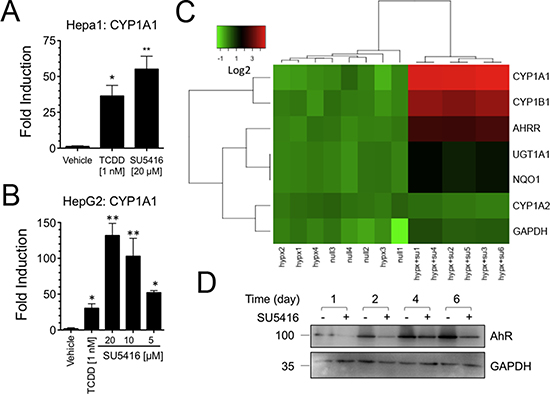 SU5416 increases the expression of AhR target genes.