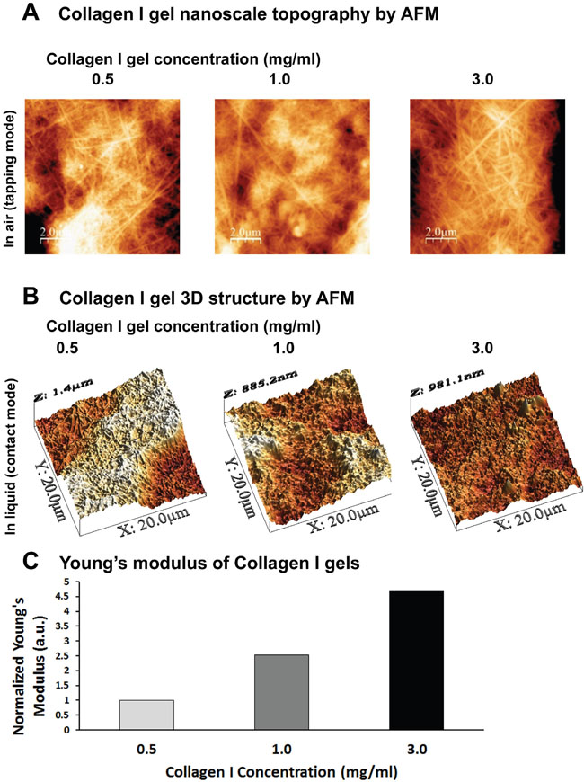 Defining the 3D culture system of Collagen I gels by AFM.