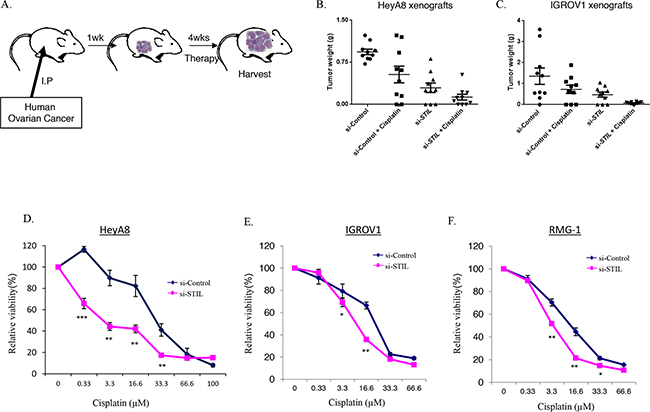 Therapeutic cooperation between STIL depletion and cisplatin in ovarian cancer.