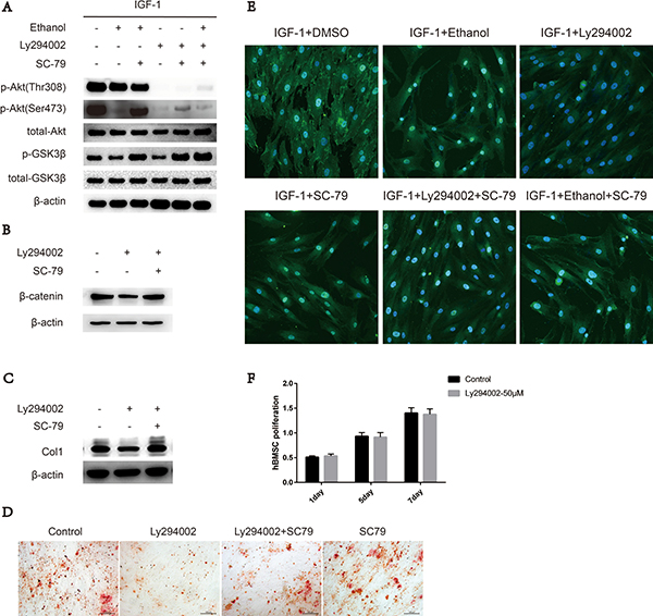 SC-79 induced cytosolic activation of Akt antagonizes the inhibitory effect of ethanol on Ser473 in BMSCs.