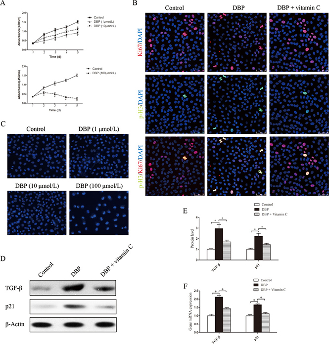 DBP inhibits NRK52E cell growth and induces G2/M arrest and the overproduction of TGF-β in NRK52E cells at a sublethal dose.