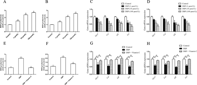 DBP generates oxidative stress and reduces the expression of the gene responsible for the prevention of oxidative activity in NRK49F and NRK52E cells.