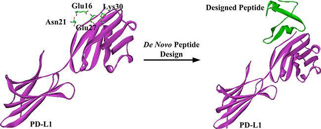 Schematic representation of de novo peptide design.