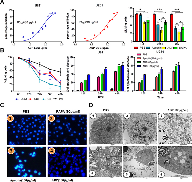 Comparative efficacies of ADP on inhibiting GBM cell growth and its effect on cell viability.