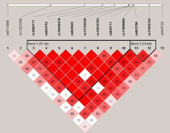 Haplotype block map for part of the SNPs in ACYP2 gene.