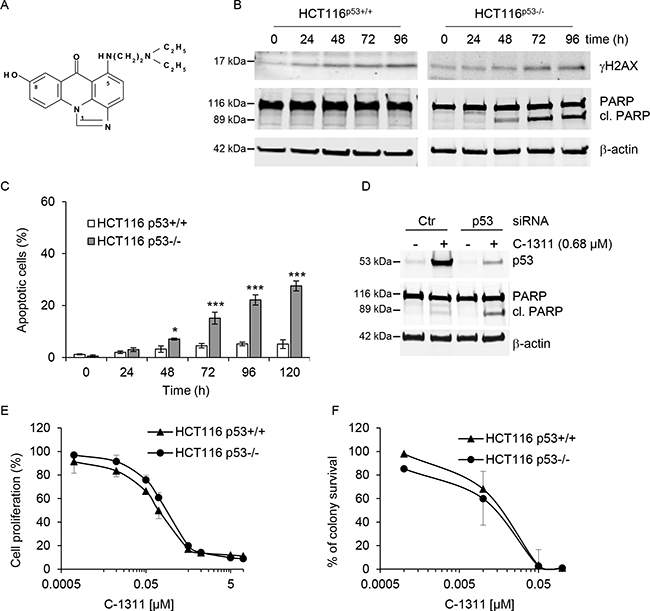 C-1311 induces apoptosis in cells lacking p53.
