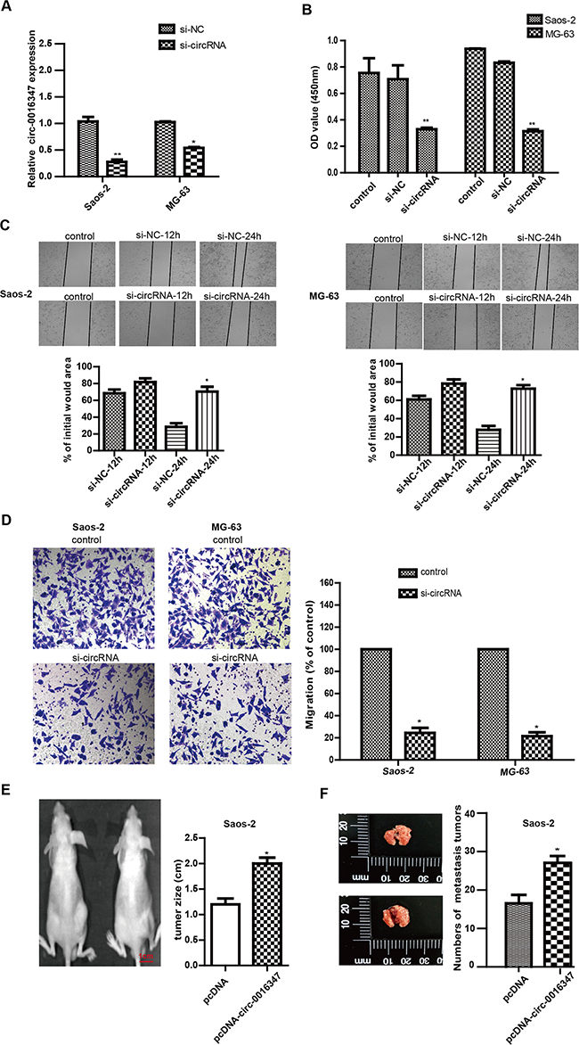 Circ-0016347 knockdown inhibits the proliferation, invasion and metastasis of osteosarcoma cells.