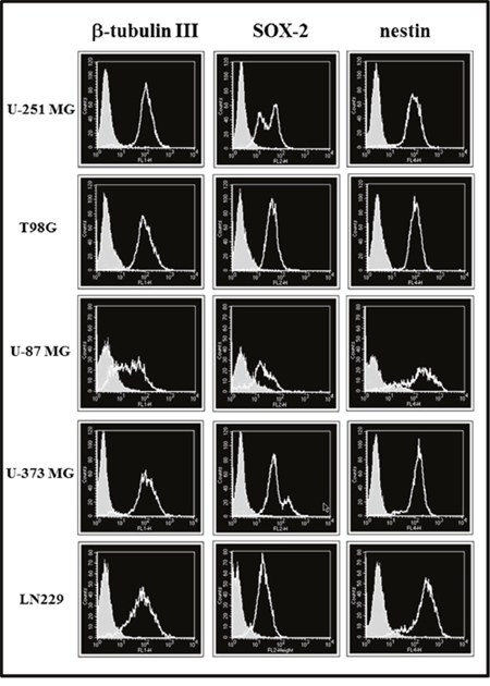 Cytofluorimetric analysis for β-tubulin III, SOX-2 and nestin expression in glioma cell lines maintained in St-M (clear profile).