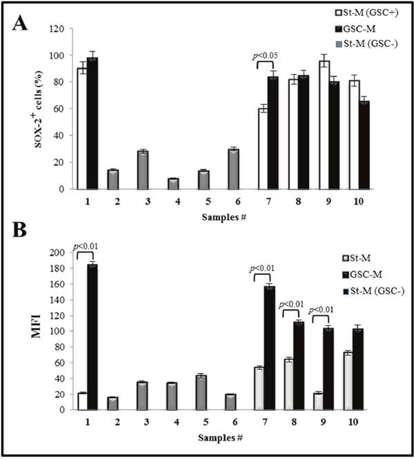 SOX-2 immunostaining analysis of glioma primary cultures.