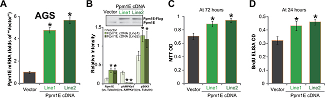 Exogenous Ppm1E over-expression promotes gastric cancer cell survival and proliferation.