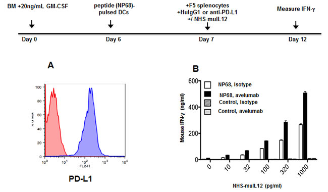 Effects of an avelumab in combination with NHS-muIL12 on T cell activation