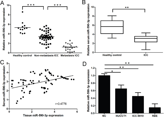 Expression of miR-590-3p in tissues, sera and cell lines of ICC.
