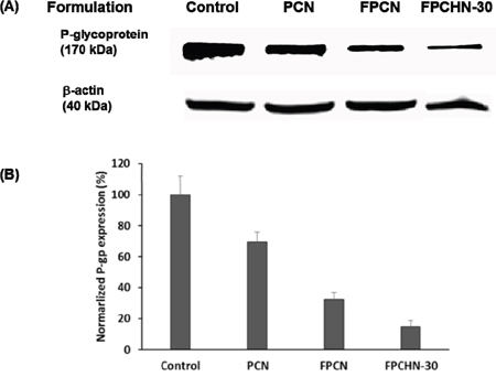 The expression of (A) p-gp, and β-actin and (B) normalized p-gp integrity after treatment of PCN, FPCN, and FPCHN-30 for 4 h in MCF-7/ADR cells.