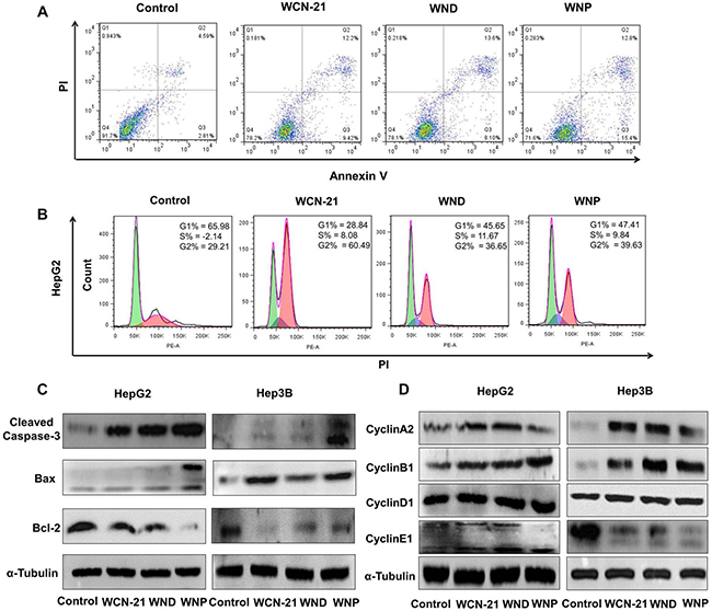 Effects of WCN-21, WND and WNP on tumor cell apoptosis and cell cycle progression in vitro.