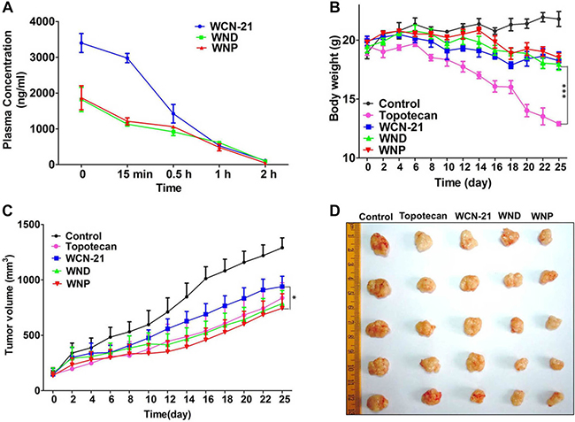 The pharmacokinetic analysis of WCN-21 in mouse plasma in Kunming mice and anti-tumor effects of WCN-21, WND and WNP in xenograft mouse model.