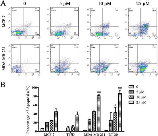 Cu(sal)(phen) induces apoptosis of breast cancer cells.