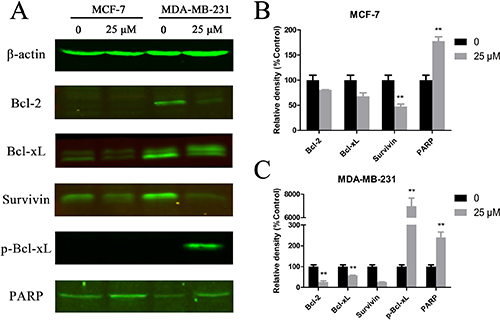 Cu(sal)(phen) treatment down-regulates expression of anti-apoptotic proteins.
