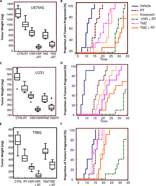 Radiosensitizing effects of vosaroxin on tumor weight and time to progression in xenograft models.