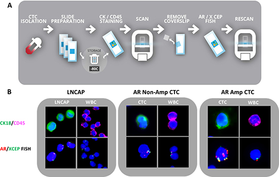 CTC capture and validation in LNCAP and mCRPC patients.